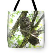 0304-002 - Barred Owl Tote Bag