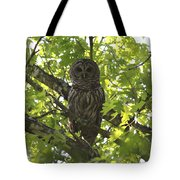 0313-010 - Barred Owl Tote Bag