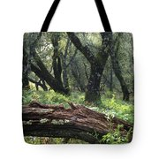 1b6338 Oak Forest On Sonoma Mountain Ca Tote Bag
