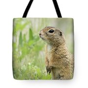 A European Ground Squirrel Standing In A Meadow In Spring Tote Bag