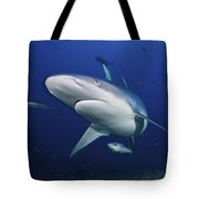 A Large Silvertip Shark, Fiji Tote Bag by Terry Moore