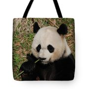 Adorable Giant Panda Eating A Green Shoot Of Bamboo Tote Bag