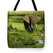 African Elephant In Swamp Tote Bag