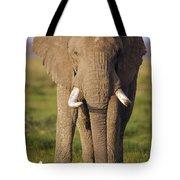 African Elephant Loxodonta Africana Tote Bag by Gerry Ellis