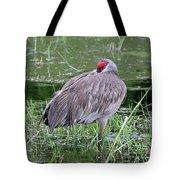 Sweet Sandhill Slumber Tote Bag