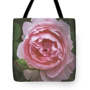 Alnwick Rose 1830 Tote Bag