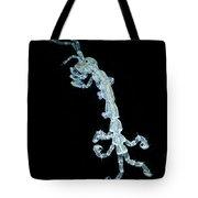 Amphipod Crustacean, Lm Tote Bag