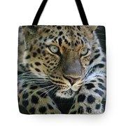 Amur Leopard #2 Tote Bag