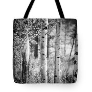 Aspen Trees In Black And White Tote Bag