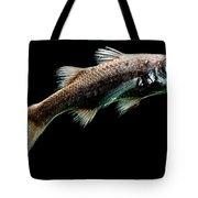 Atlantic Pelagic Basslet Tote Bag