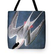 Audubon: Tern Tote Bag