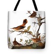 Audubon: Wren Tote Bag