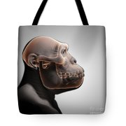 Australopithecus With Skull Tote Bag