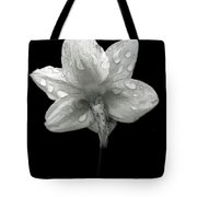 Backside Daffodil Dew Tote Bag
