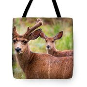 Beautiful Mule Deer Herd Tote Bag