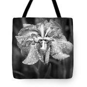 Bellevue Botanical Garden Iris 6402 Tote Bag