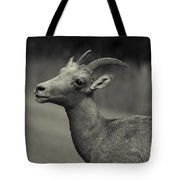 Big Horn Sheep Tote Bag by Barbara Schultheis
