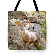 Bighorn Sheep In The San Isabel National Forest Tote Bag