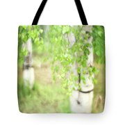 Birch In Spring Tote Bag