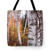Birch Trees Fall Scenery Tote Bag