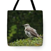 Bird On The Hedges Tote Bag