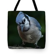 Birds From Heaven - Bluejay Tote Bag