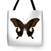 Black And Brown Butterfly Species Papilio Nephelus Tote Bag