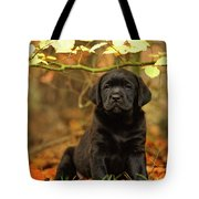 Black Labrador Retriever Puppy Tote Bag