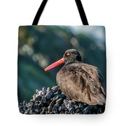 Black Oystercatcher Tote Bag