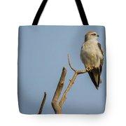 Black Winged Kite  Tote Bag
