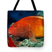 Blackside Hawkfish Tote Bag