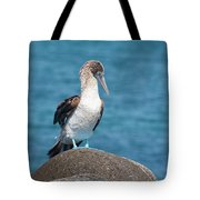 Blue-footed Booby On Rock Tote Bag