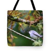 Blue-gray Gnatcatcher In Conifer Tote Bag