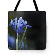 Blue Iris Hermodactyloides Tote Bag