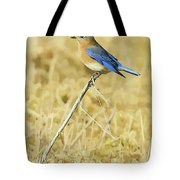 Bluebird In February Tote Bag