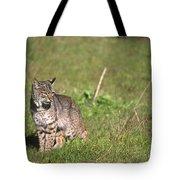 Bobcat - Wildcat Beach Tote Bag