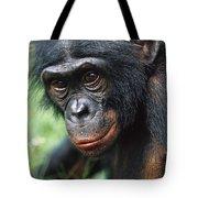 Bonobo Pan Paniscus Portrait Tote Bag
