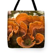 Bracket Fungi Tote Bag