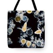 Brine Shrimp Artemia Salina, Lm Tote Bag