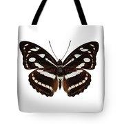 butterfly species Athyma reta moorei Tote Bag