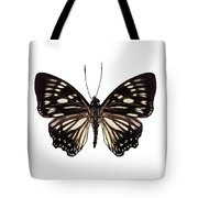 Butterfly Species Euripus Nyctelius Euploeoides  Tote Bag