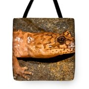 California Giant Salamander Tote Bag
