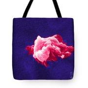 Cancer Cell Death, Sem 6 Of 6 Tote Bag