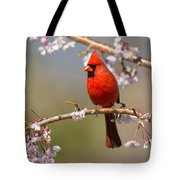 Cardinal In Cherry Tote Bag