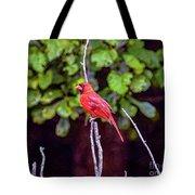 Cardinal Twigging A Break Tote Bag