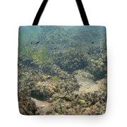 Catfish Fry Tote Bag