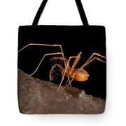 Cave Harvestman Tote Bag
