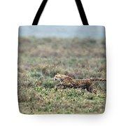 Cheetah Acinonyx Jubatus Hunting Tote Bag