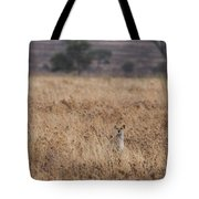 Cheetah In The Tall Grass Tote Bag