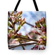 Cherry Tree Buds Tote Bag